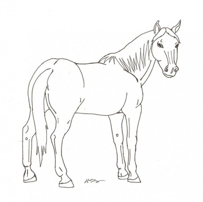 Arabian Horse Coloring Pages Print - Coloring Home