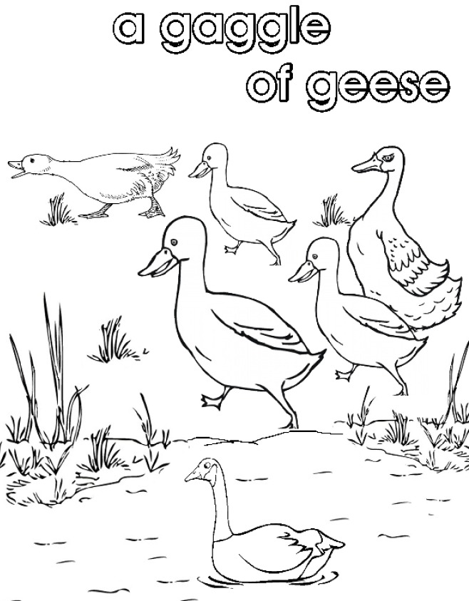 noun coloring page - collective nouns coloring coloring pages