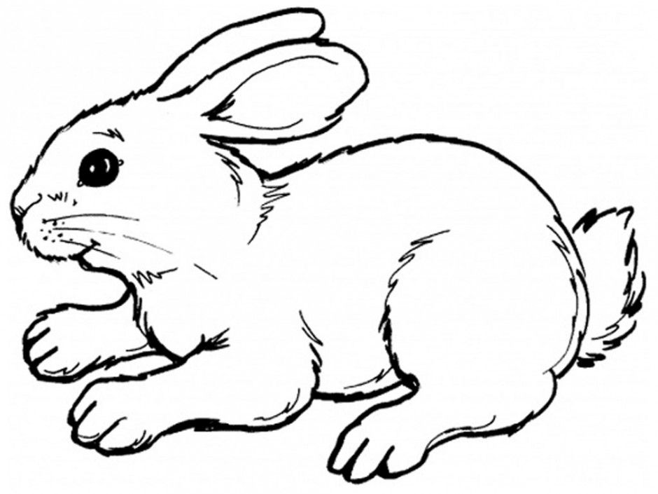 Realistic rabbit coloring pages coloring home for Coloring page rabbit