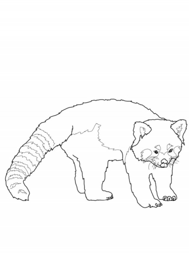 Panda color pages az coloring pages for Red panda coloring page