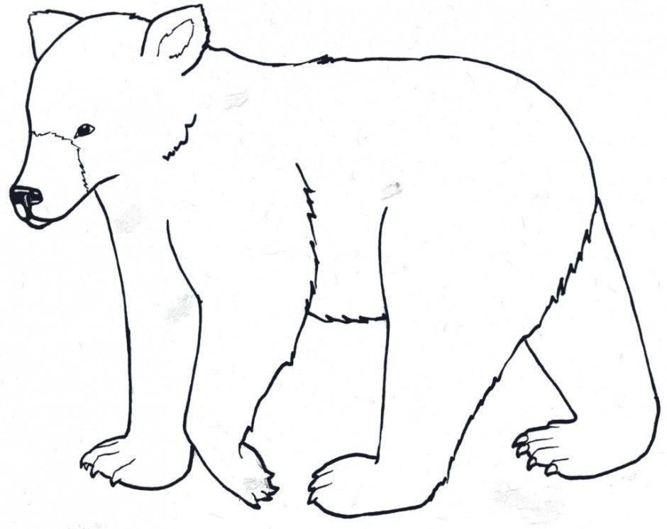 Bear Coloring Pages Pdf : Grizzly bear coloring page koala polar free printable