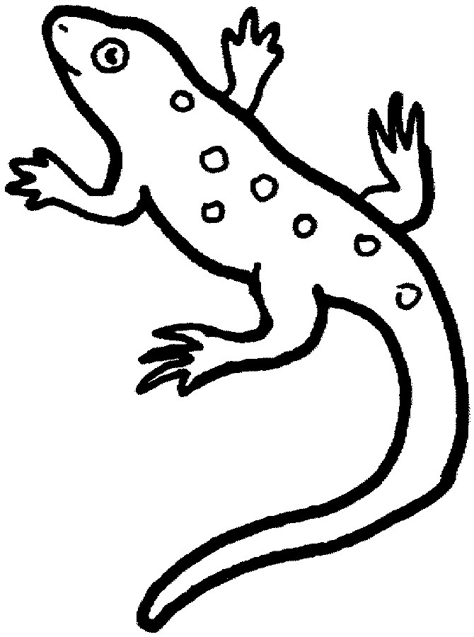 Coloring Pages Lizard - AZ Coloring Pages