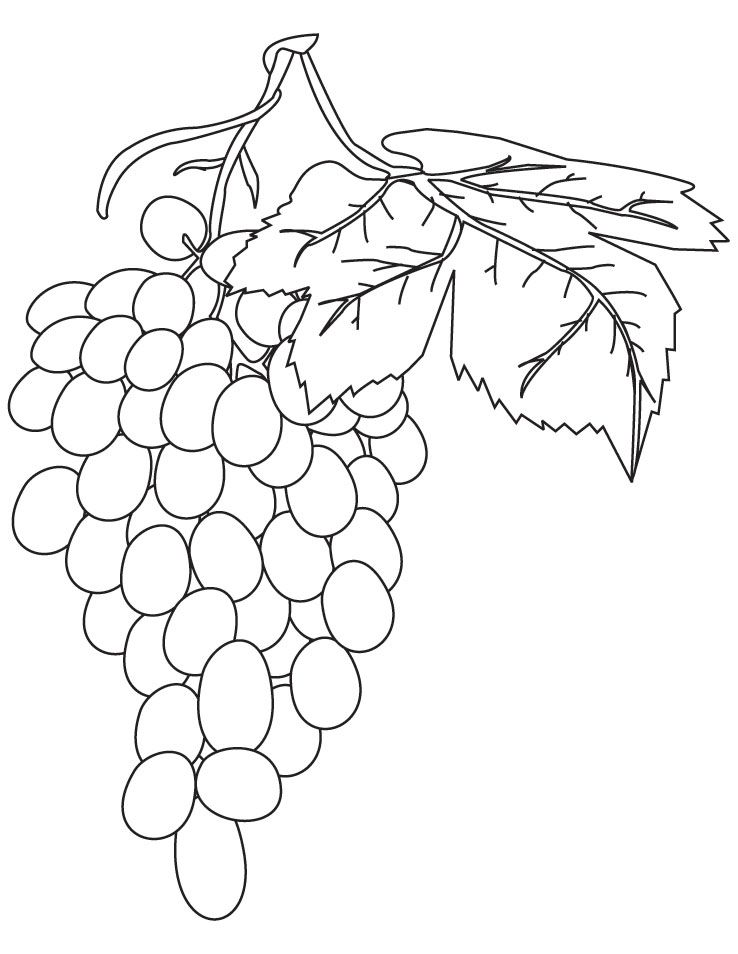 Red grapes coloring pages | Download Free Red grapes coloring