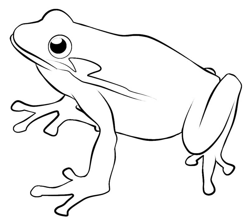 One Single Frog Coloring Page: one-single-frog-coloring-pages