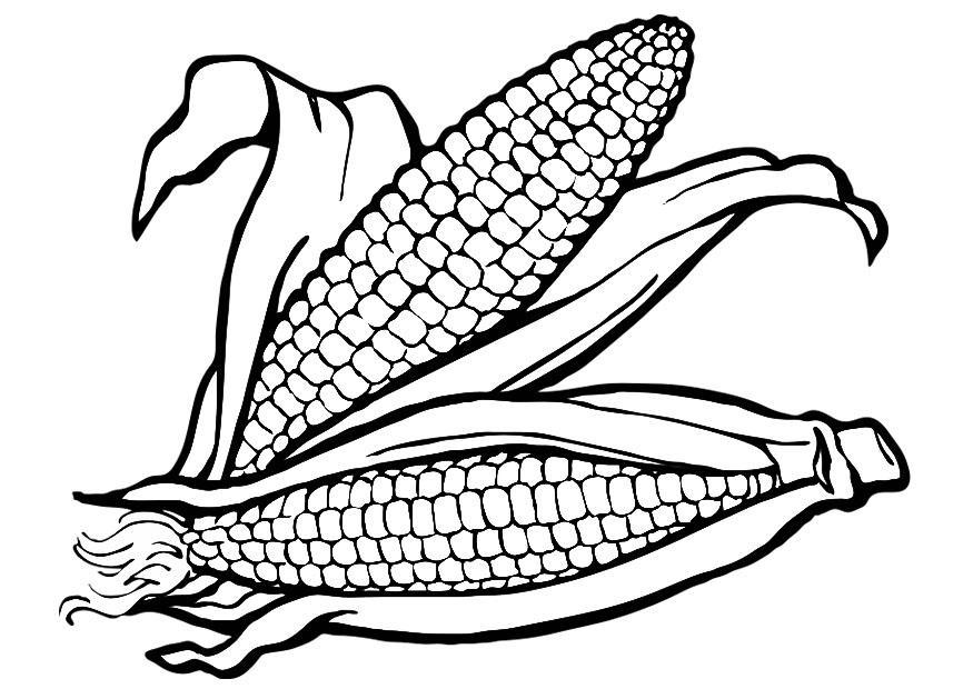 Corn Cob Coloring Page Coloring Home Corn Cob Coloring Page