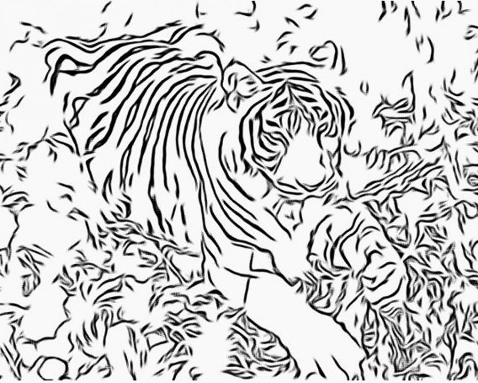 Realistic Tiger Coloring Pages Tiger Coloring Page 50 Tiger