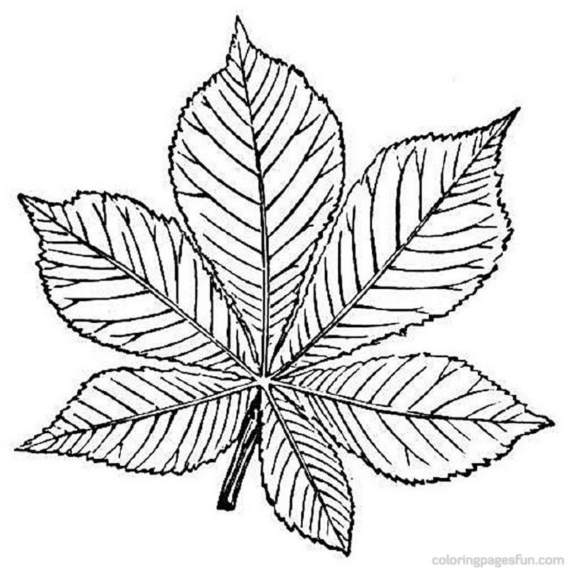 trees and leaves Colouring Pages (page 2)