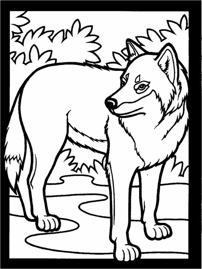 Gray Wolf Coloring Pages  Coloring Home