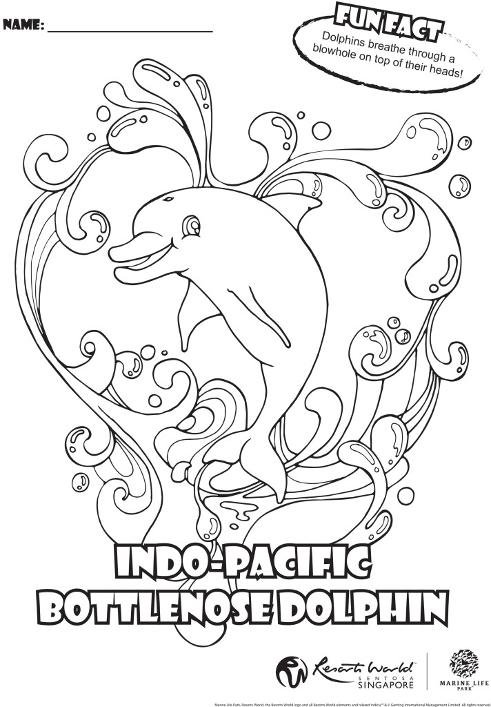 Dolphin pictures to color az coloring pages for Bottlenose dolphin coloring page