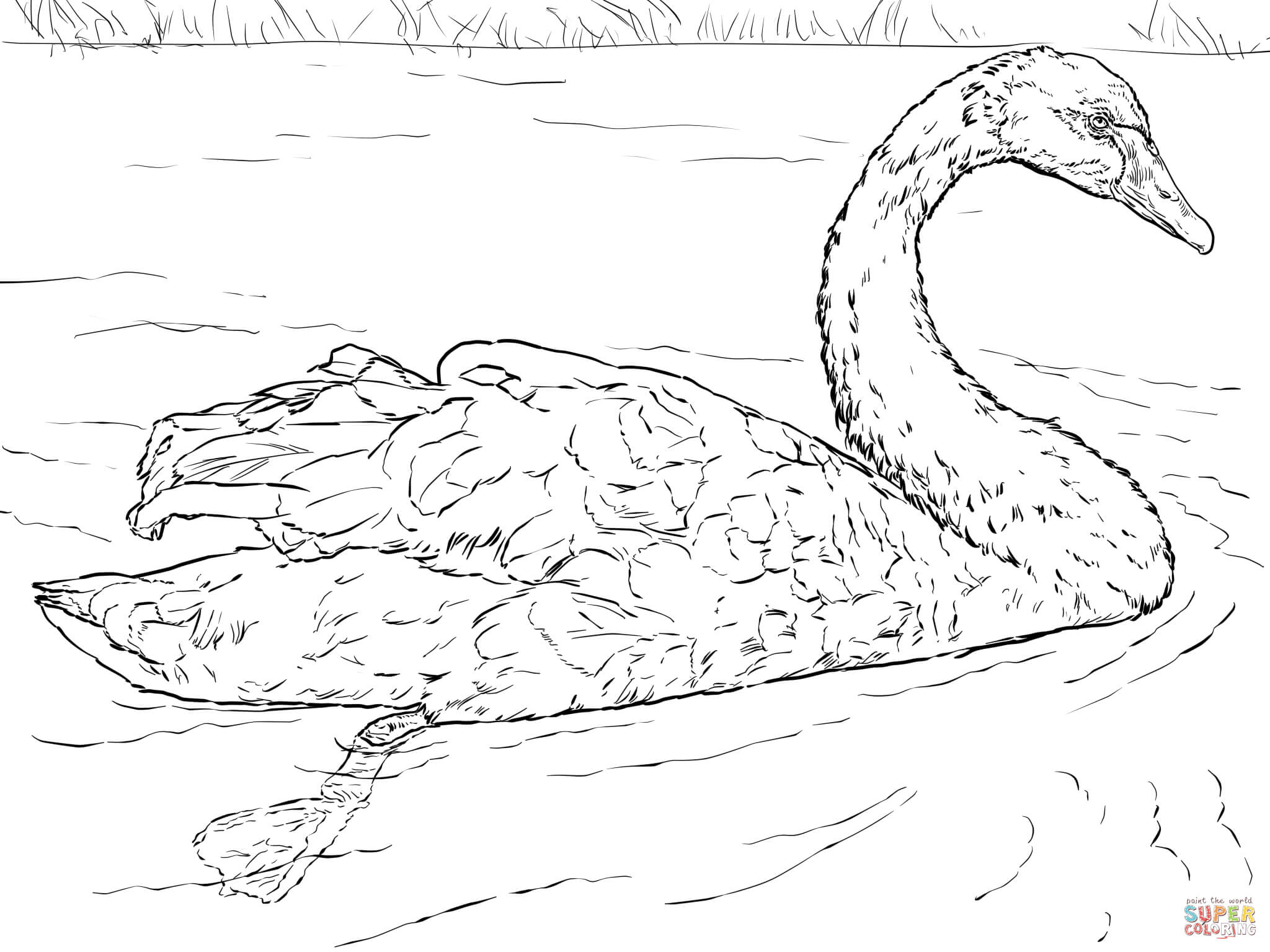 swan coloring pages to print - photo#33