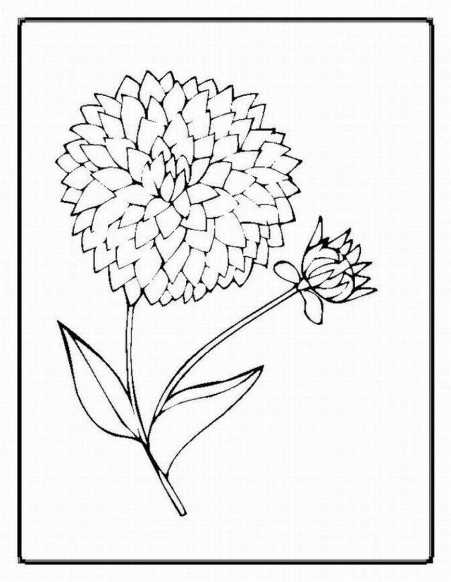 Realistic Flower Coloring Pages Coloring Home