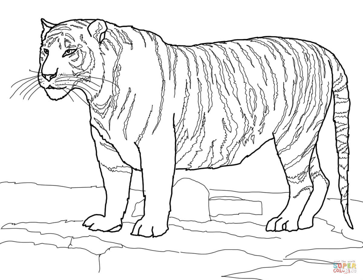 Tigers coloring pages | Free Coloring Pages