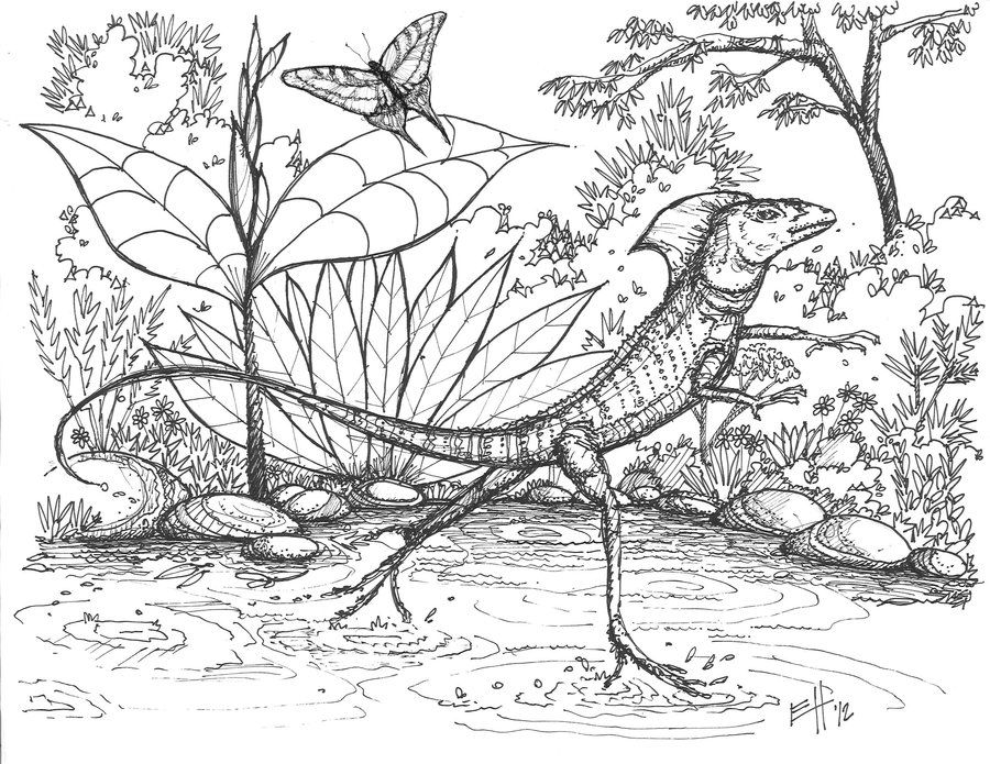 Basilisk lizard coloring page coloring home for Lizard coloring pages