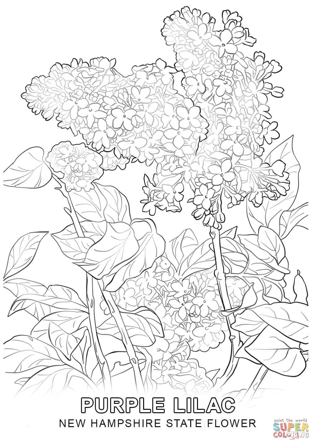 New mexico tree coloring page coloring home for Mexico map coloring page