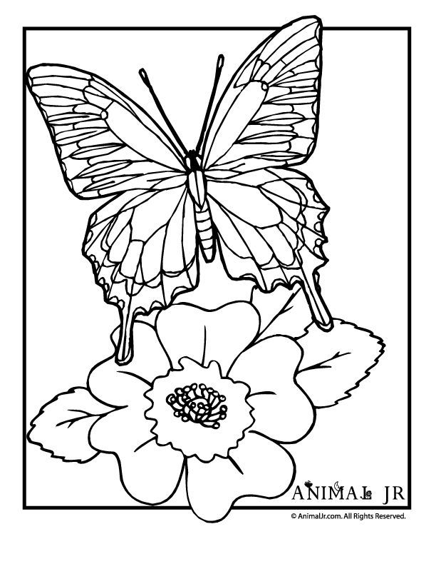 Georgia Bulldogs Coloring Pages