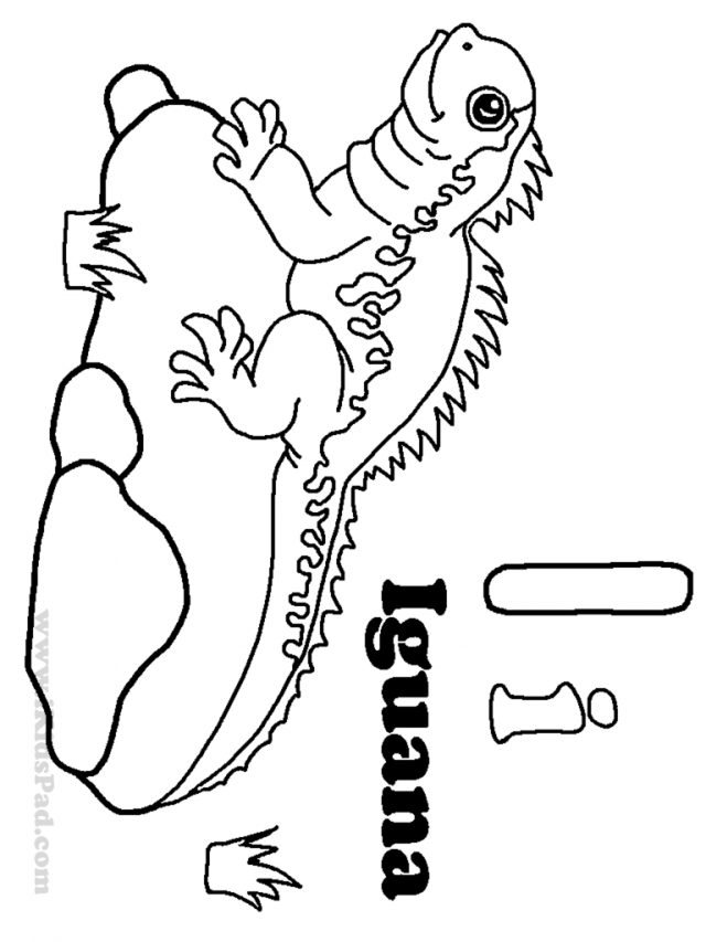 Iguana pictures for kids coloring home for Iguana coloring pages