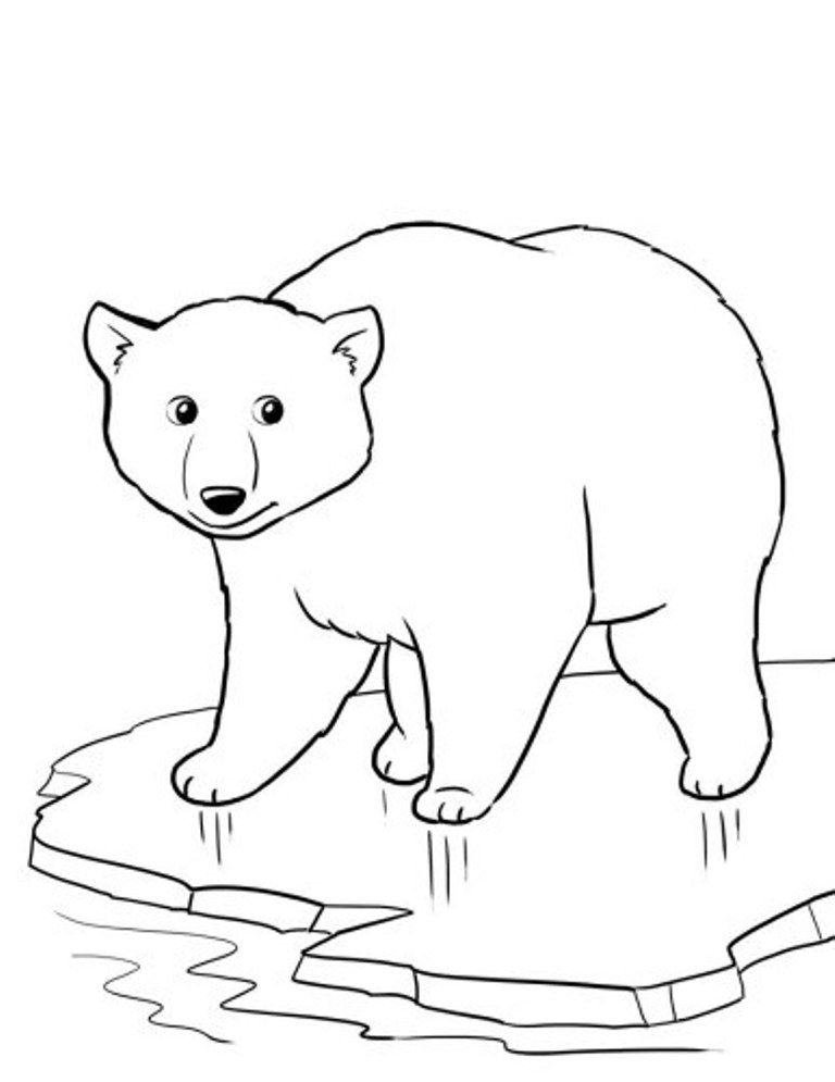 Printable pictures of polar bears coloring home for Coloring pages polar bear