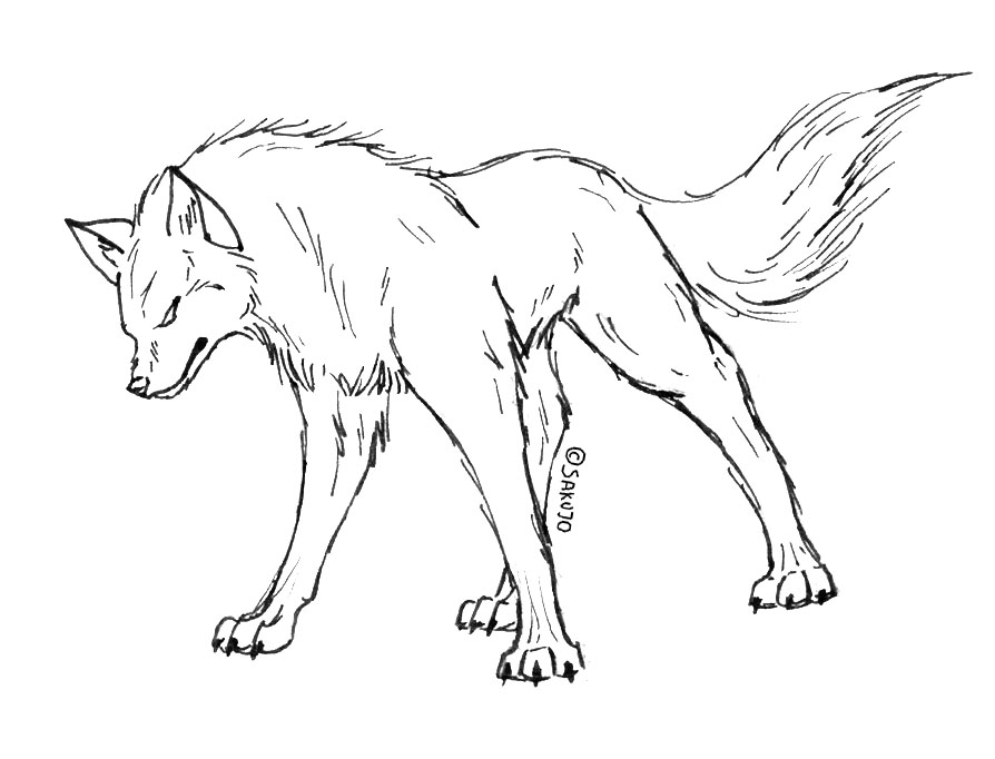 Realistic Drawings Of Wolves Growling Realistic Drawings Of Wolves