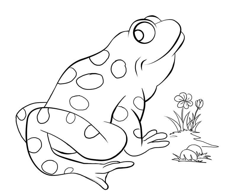 Frog with Flower Coloring Page: frog-with-flower-coloring-pages