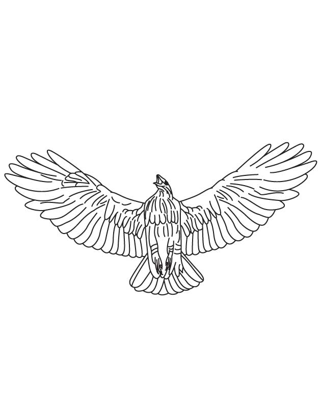 Smaller Animals Eater Hawk Coloring Page