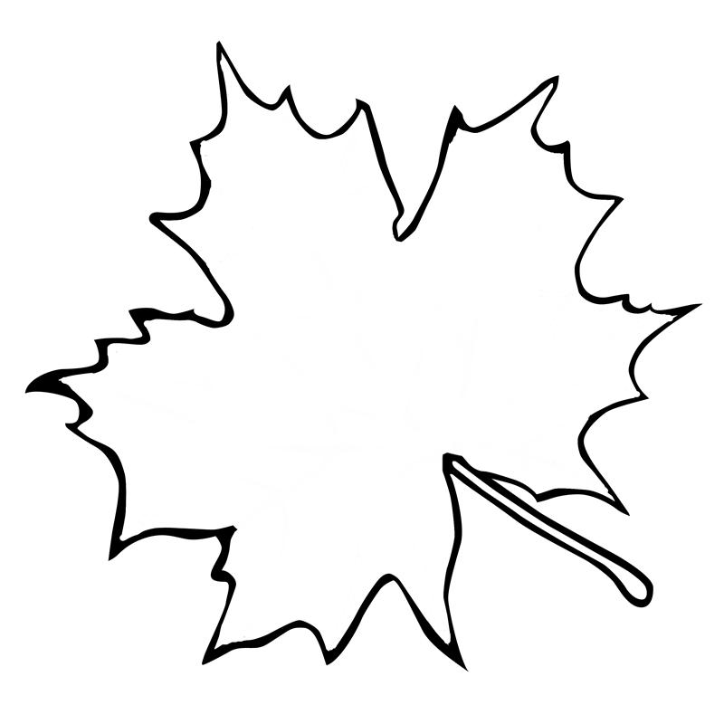 Canadian Leaf Outline