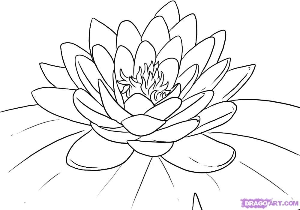 Lily Pad Coloring Page Free