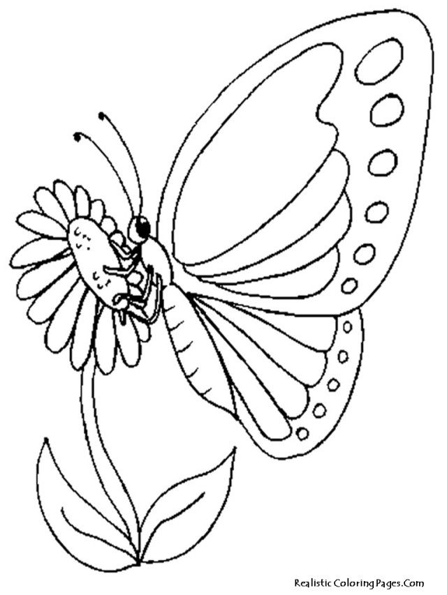 Print Butterfly And Sun Flower Coloring Pages Realistic Hd