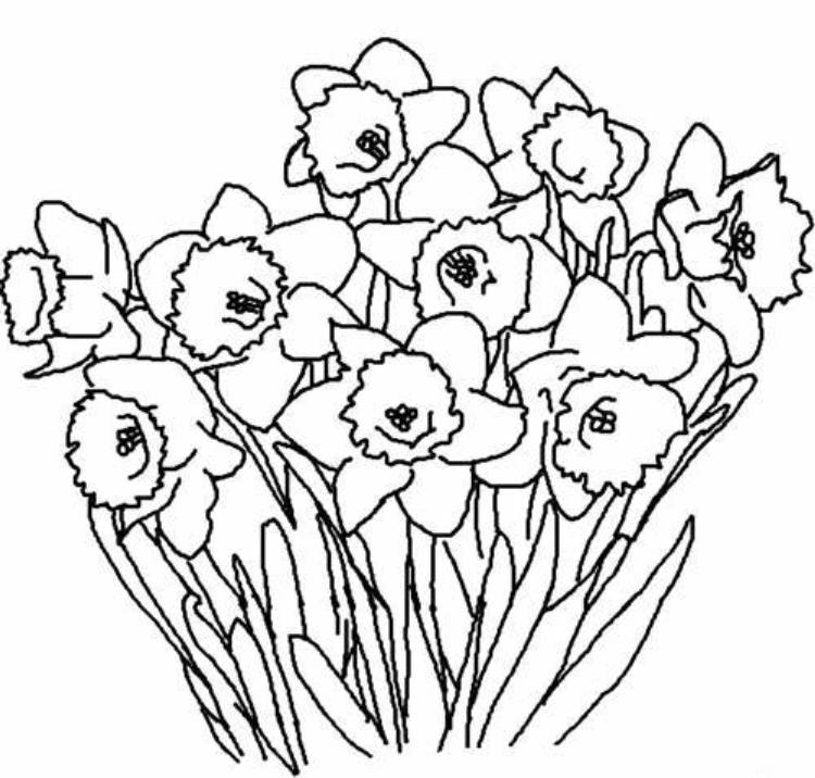 Print Spring Flowers Coloring Pages Kids Or Download