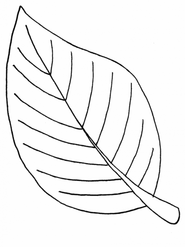 Maple Leaf Coloring Pages Az Coloring Pages Maple Leaf Coloring