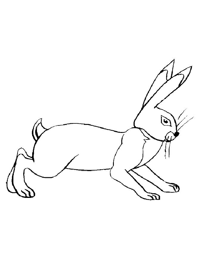 wild animals and coloring pages - photo#36