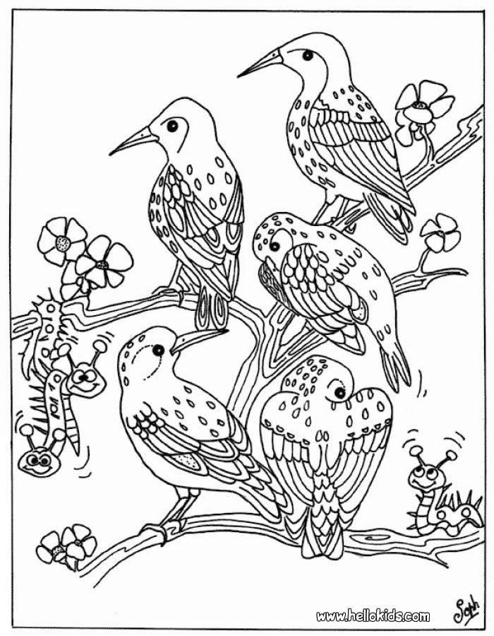 Coloring Birds SECRETARY BIRD 6BIRDS COLORING PAGES