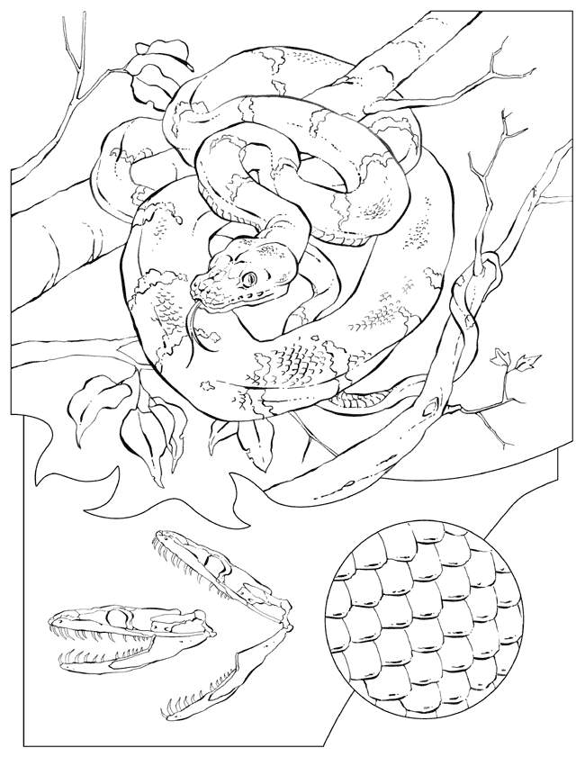 Dangerous Rattlesnake Coloring Pages