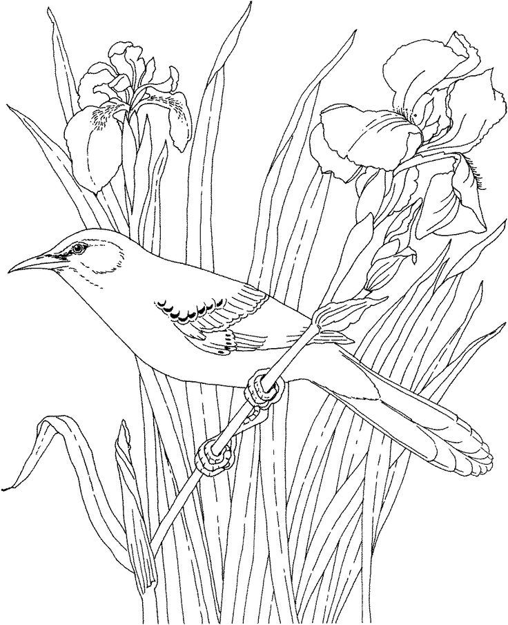 bluebonnet coloring page wwwimgkidcom the image kid