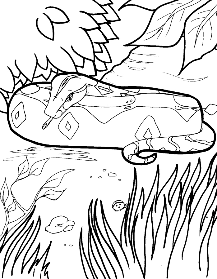 Free Coloring Pages Of Boa Constrictor Boa Constrictor Coloring Page