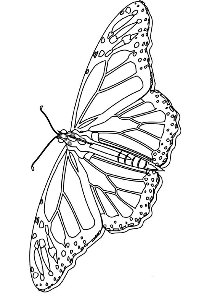 Monarch Butterfly Coloring Sheet - Butterfly Cartoon Coloring
