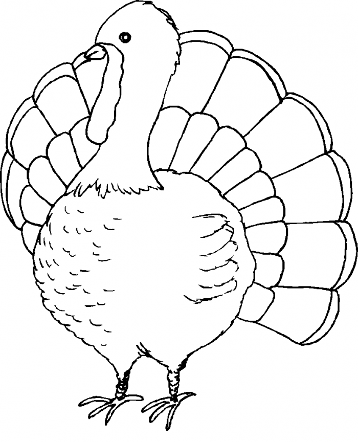 Coloring Pages Of Turkeys For Thanksgiving | 99coloring.com