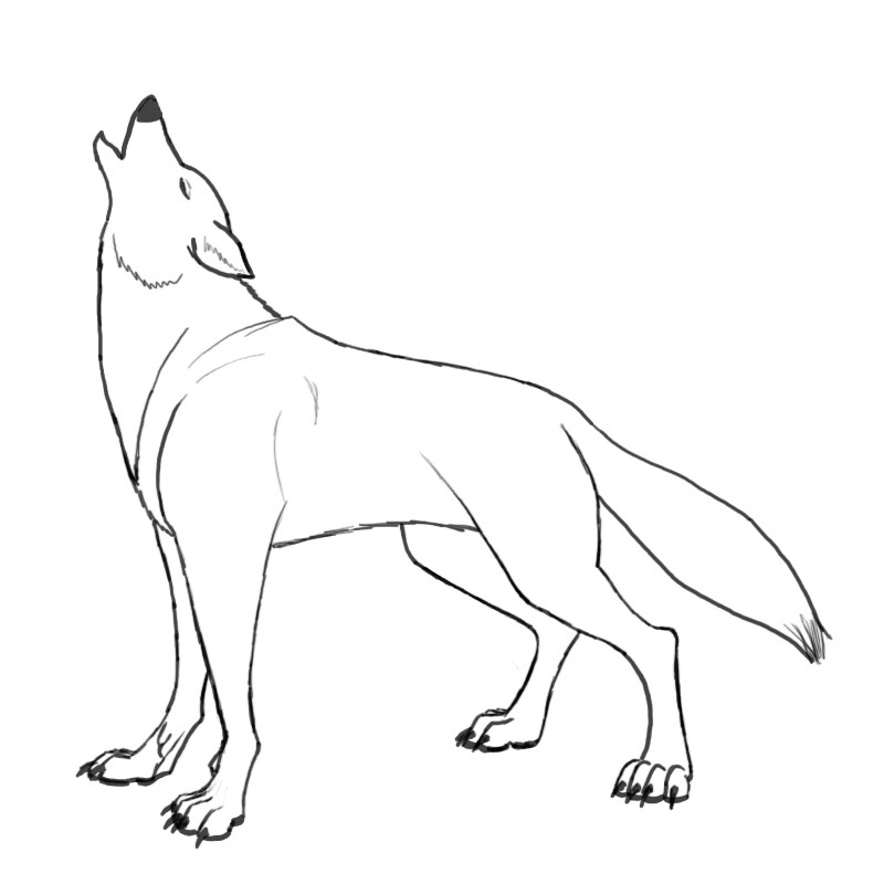 The gallery for How To Draw A Realistic Wolf Howling