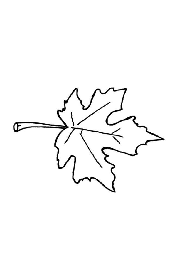 autumn leaf coloring pages