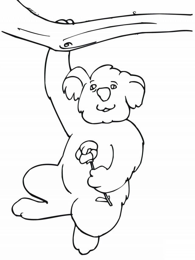 Print And Coloring Pages Koala For Kids | Coloring Pages