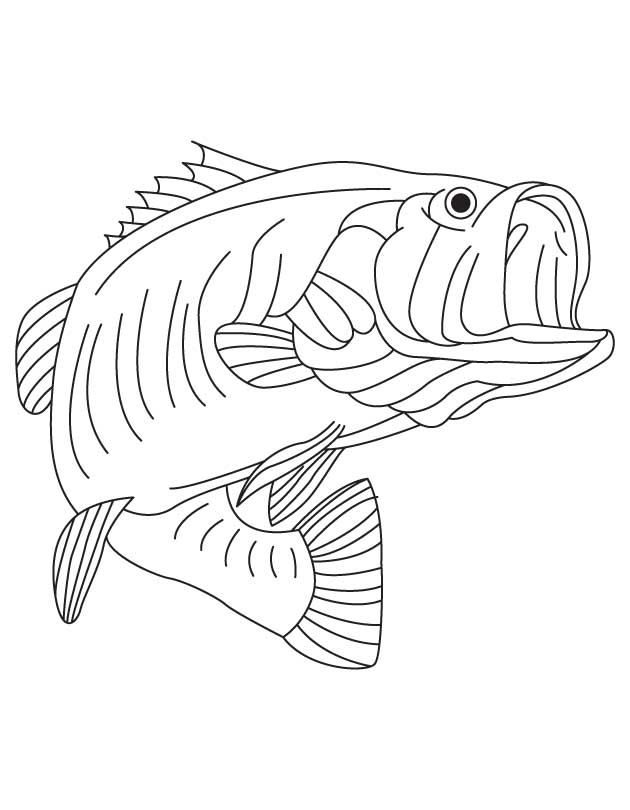 Largemouth Bass Coloring Page  Coloring Home