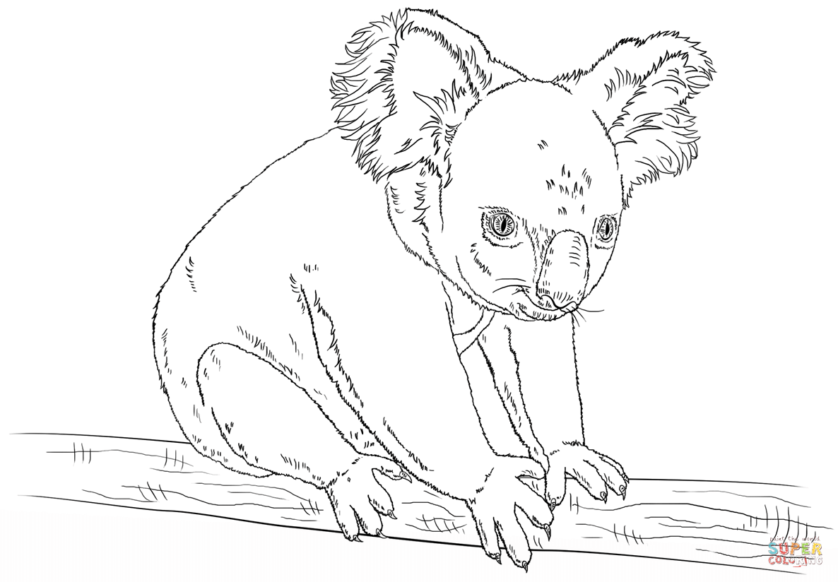 Koala Bears Coloring Pages Coloring
