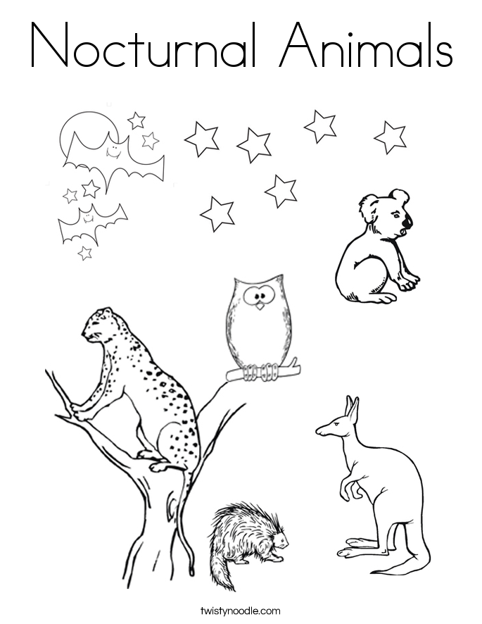 nocturnal animals coloring pages - photo#3