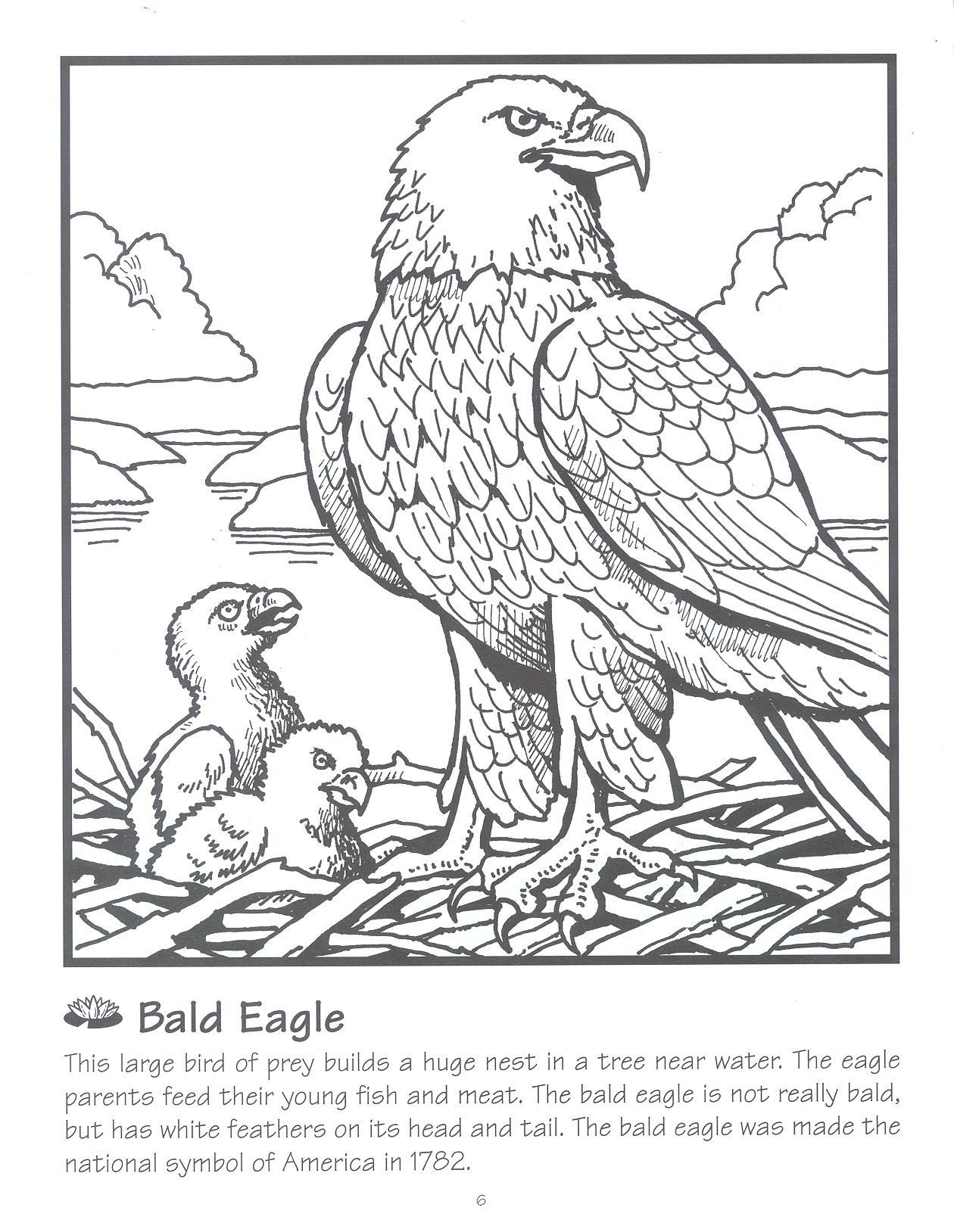 Bald Eagle Nest Coloring Page - Coloring Pages For All Ages