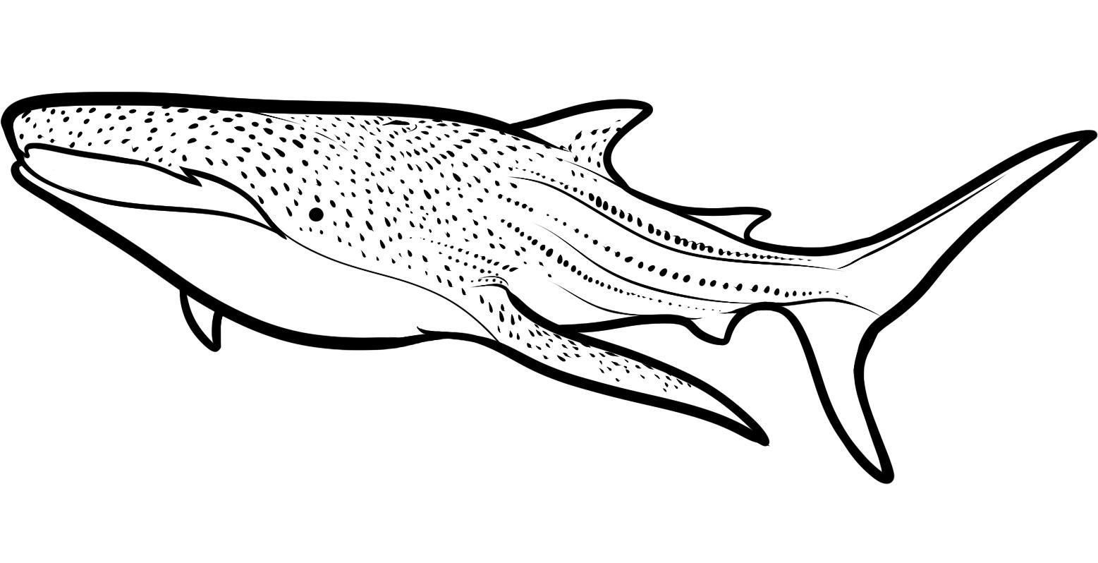Free Shark Coloring Pages To Print - Coloring Home