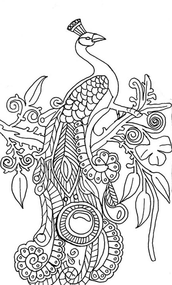 Cool Coloring Pages For Adults Peacock Coloring Home