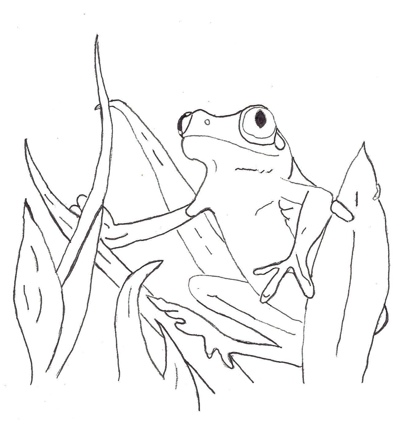 Poisondart Frog Coloring Page
