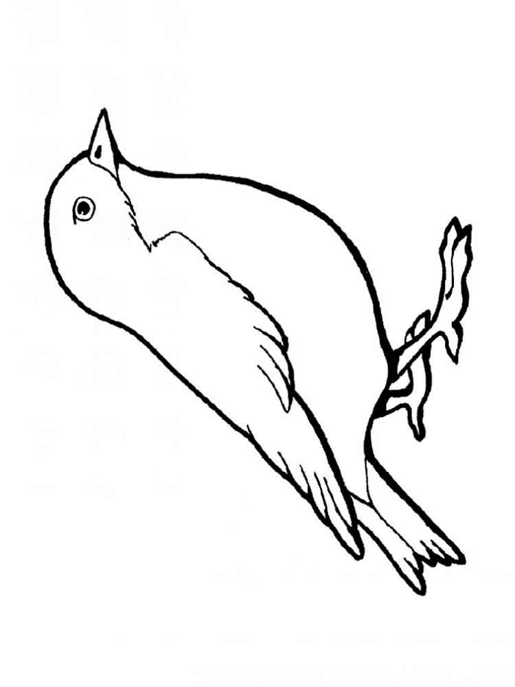 Sparrow Coloring Page - Coloring Home