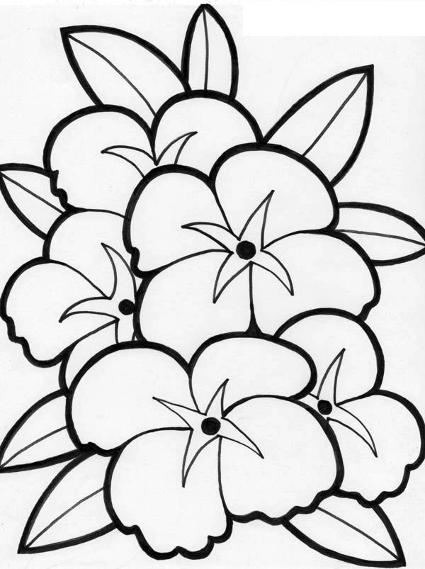 flower box coloring pages - photo#6