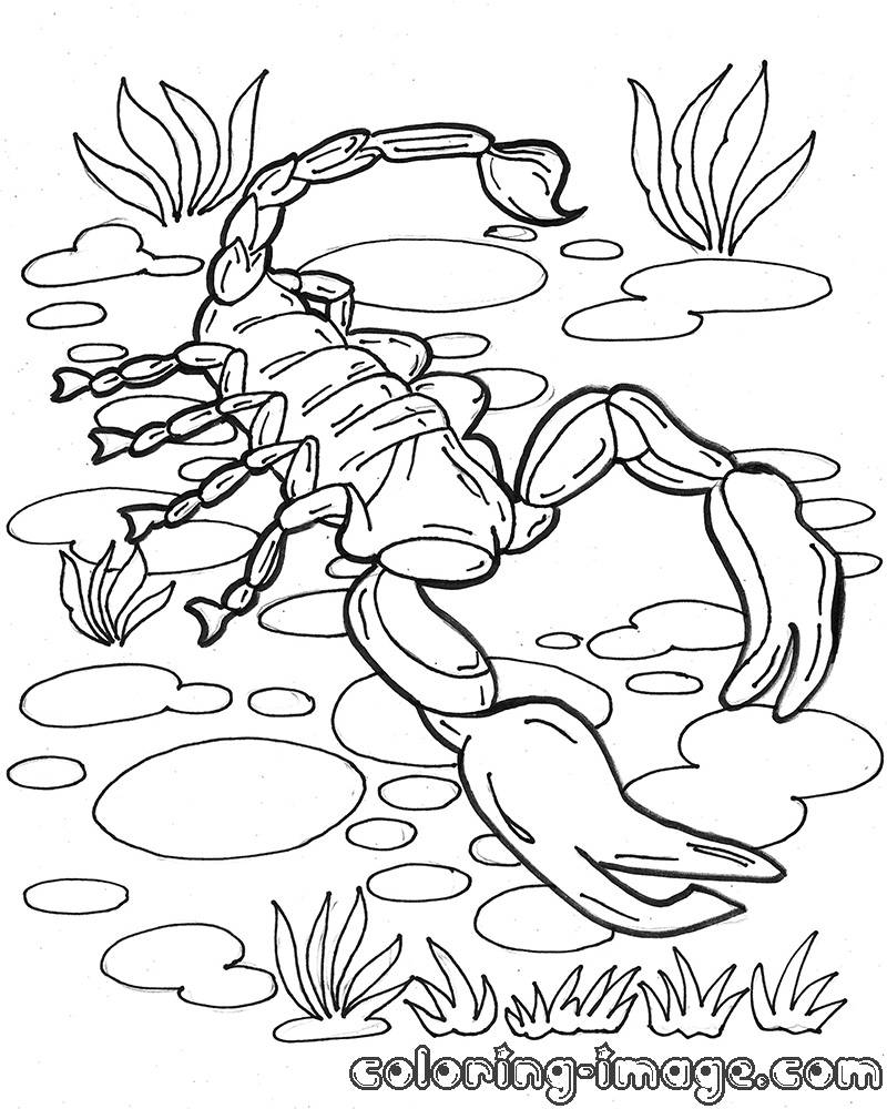 Dangerous scorpion | Free coloring pages for kids