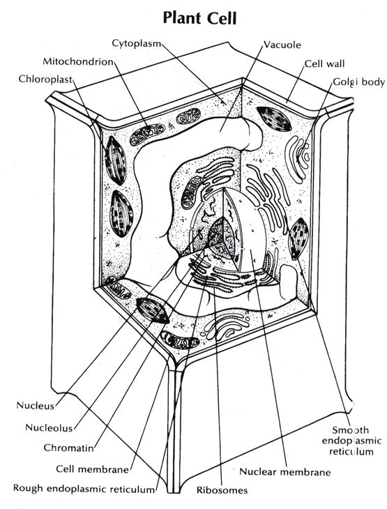 Cell Coloring Page Coloring Home